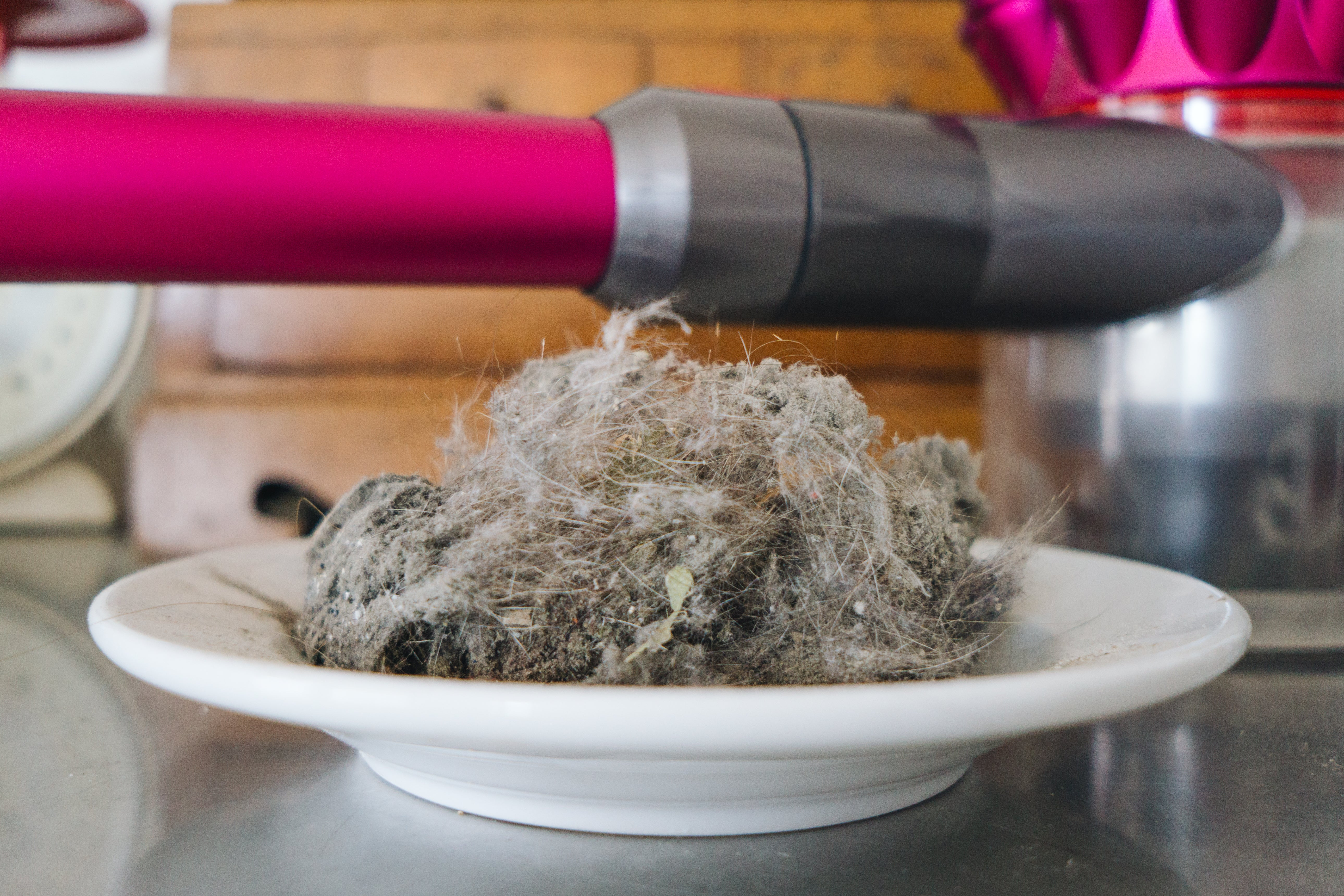 pile of cat hair