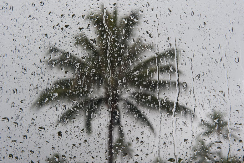 Drops of water on a pane of glass reflect a palm tree