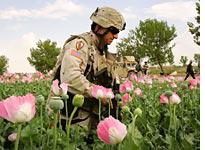 Army Col. in poppy field. Click image to expand.