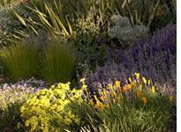 A garden at the Denver Botanic Gardens