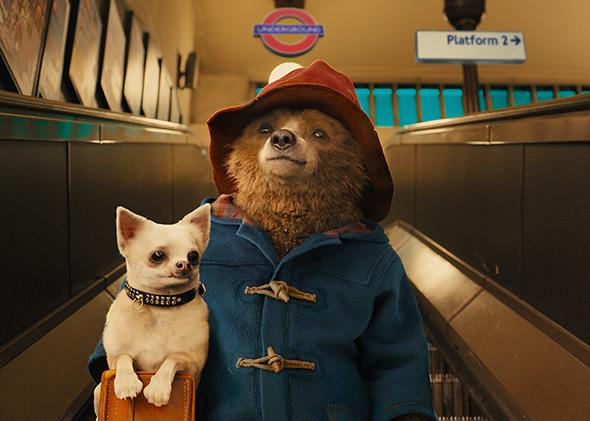 Paddington and his dog in Paddington
