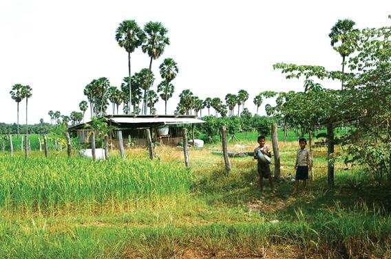 The Khmer Rouge turned Cambodia's rice farms into killing fields.