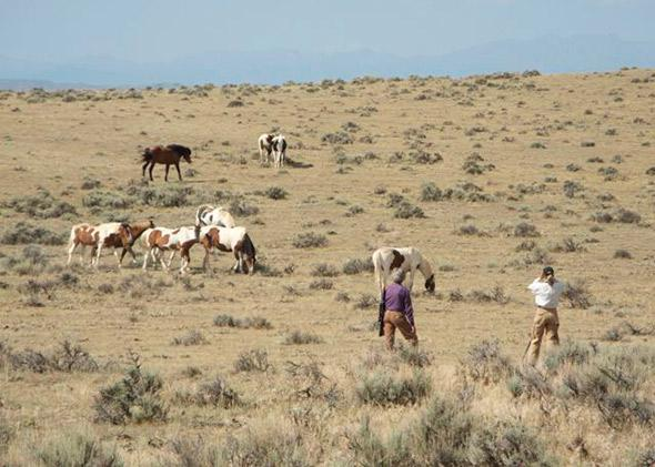 a herd of horses in the desert east of Cody, Wyo.