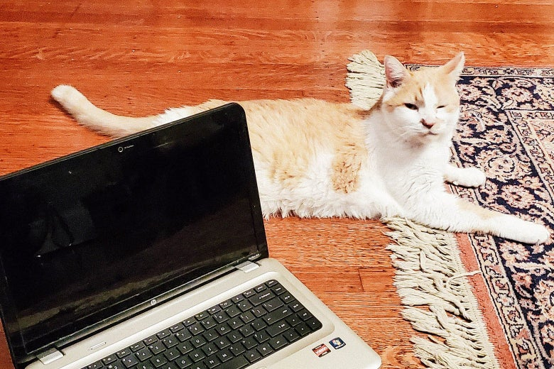 An orange-and-white cat sits on the floor next to an open laptop.