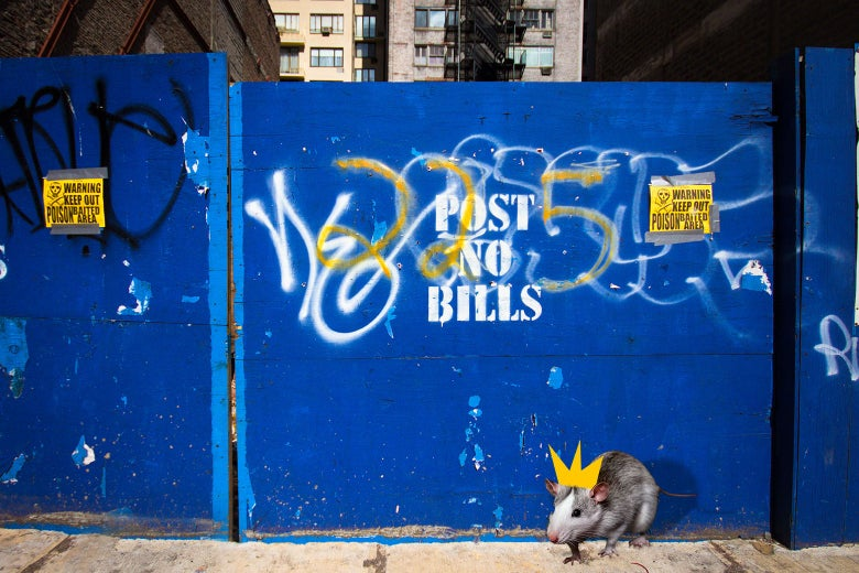"A rat wearing a crown crawls on a city street in front of a wall marked ""Post No Bills"""