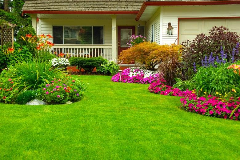 Lush lawn.