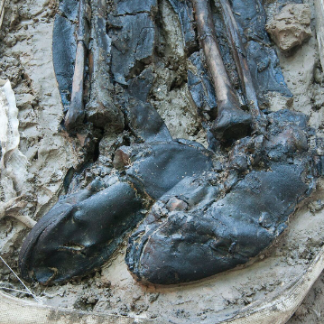 Skeleton legs surrounded by mud wearing deteriorated but comely knee-high leather boots.